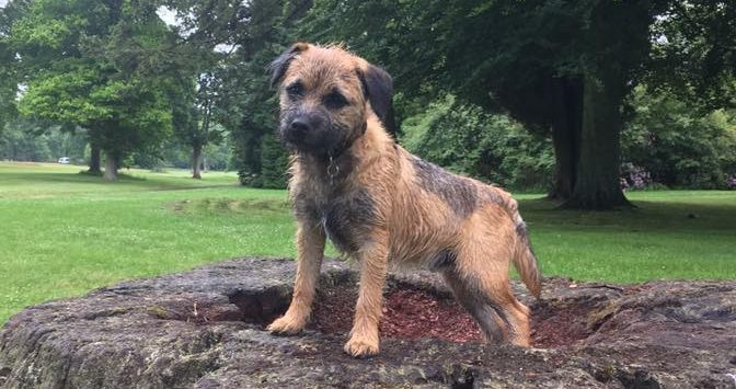 Campaigners say they have found Rosco and he will be reunited with his owner imminently.