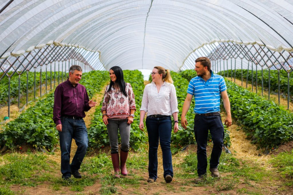 Berry banter! Michael Jarvis (Head of Marketing, Albert Bartlett), Gayle Ritchie, Gemma Rae (Packing Hall Manager) and Charles Beamish (Field Manager) discuss strawberries inside a polytunnel.