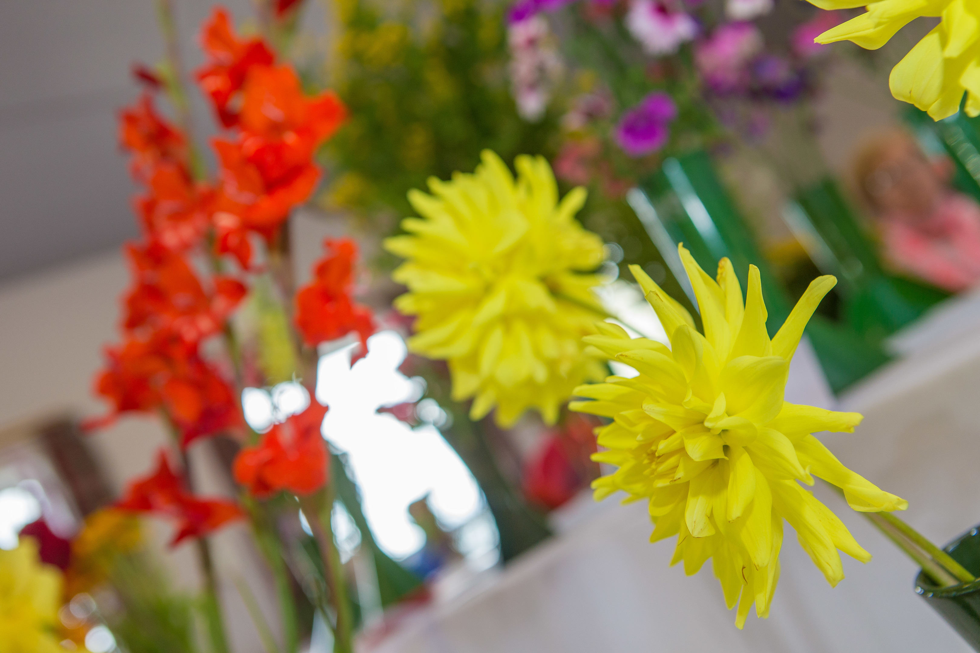 Kingsbarns and Letham hosted their annual flower shows