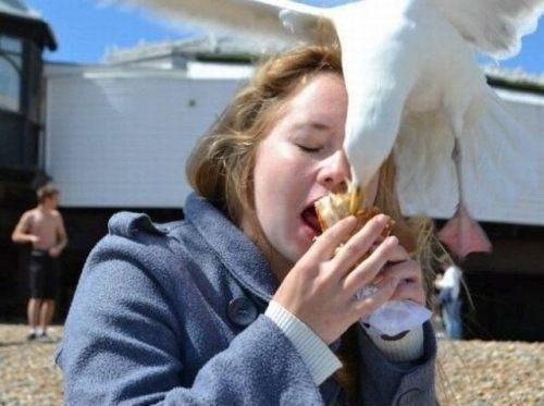 Seagull sandwich