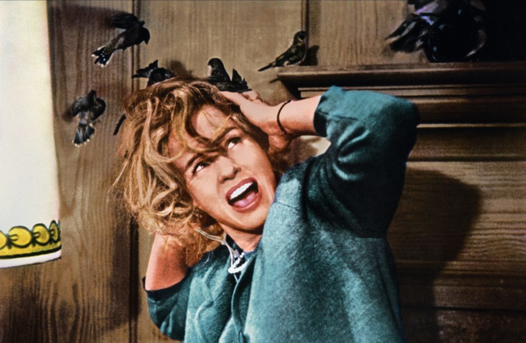 Tippi Hedren as Melanie Daniels in Alfred Hitchcock's The Birds