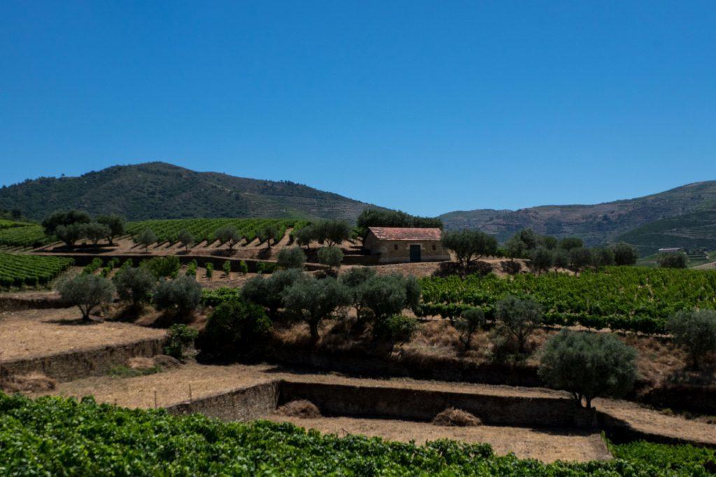Quinta da Roeda wine estate, Douro Valley, Portugal.