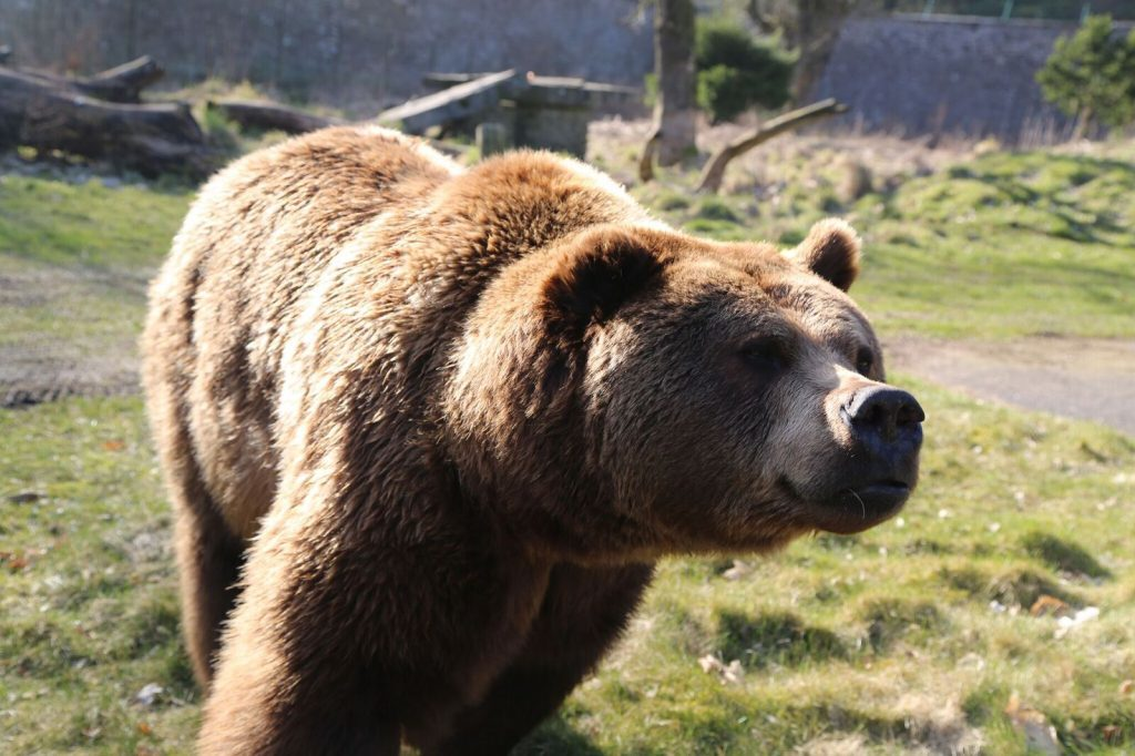 Comet was a favourite of visitors and keepers, many of whom had cared for him almost from the start.