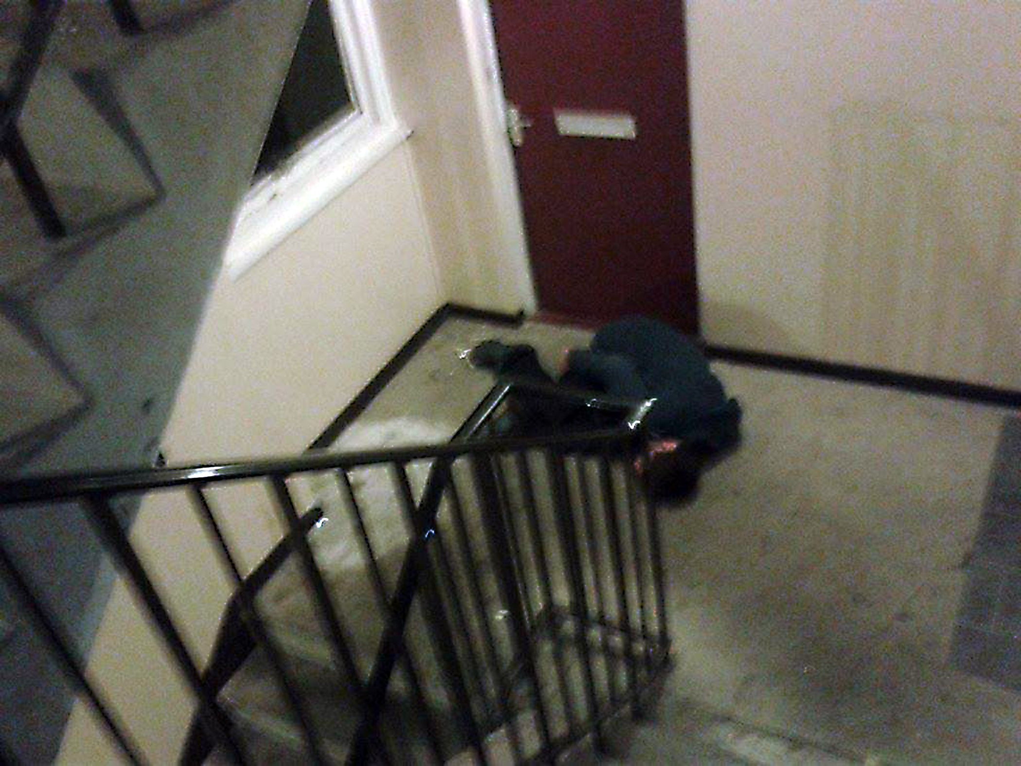 The addict passed out on the stairs.