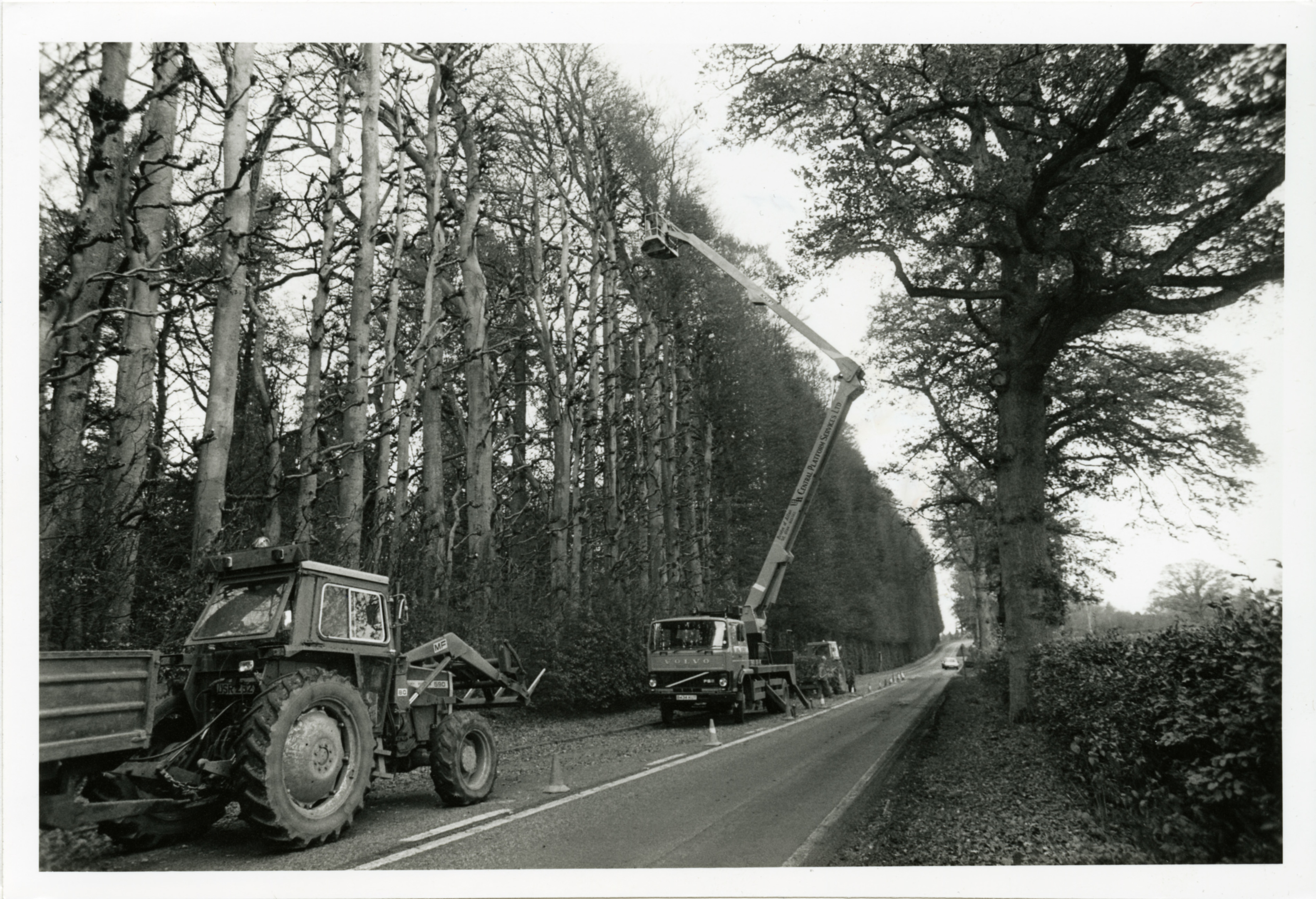 Trimming the 110ft high beech hedge at Meikleour.  H307 1988-10-XX Trimming Meikleour Hedge (C)DCT