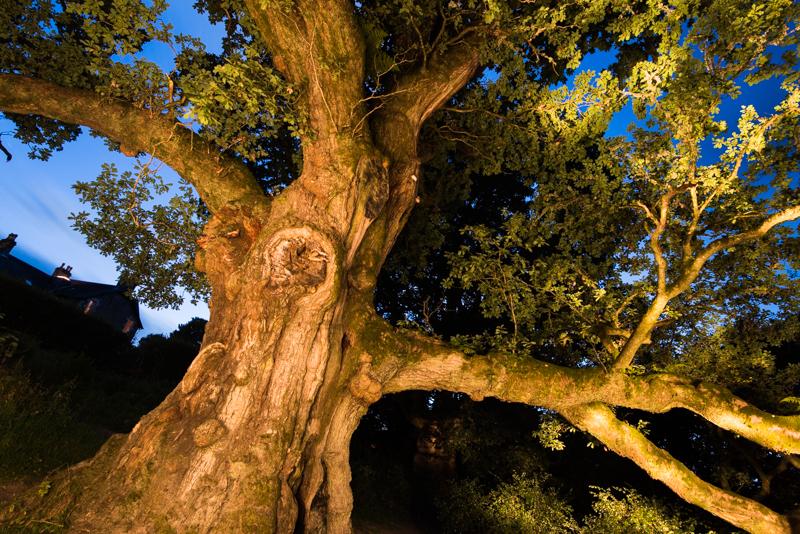 The Birnam Oak.