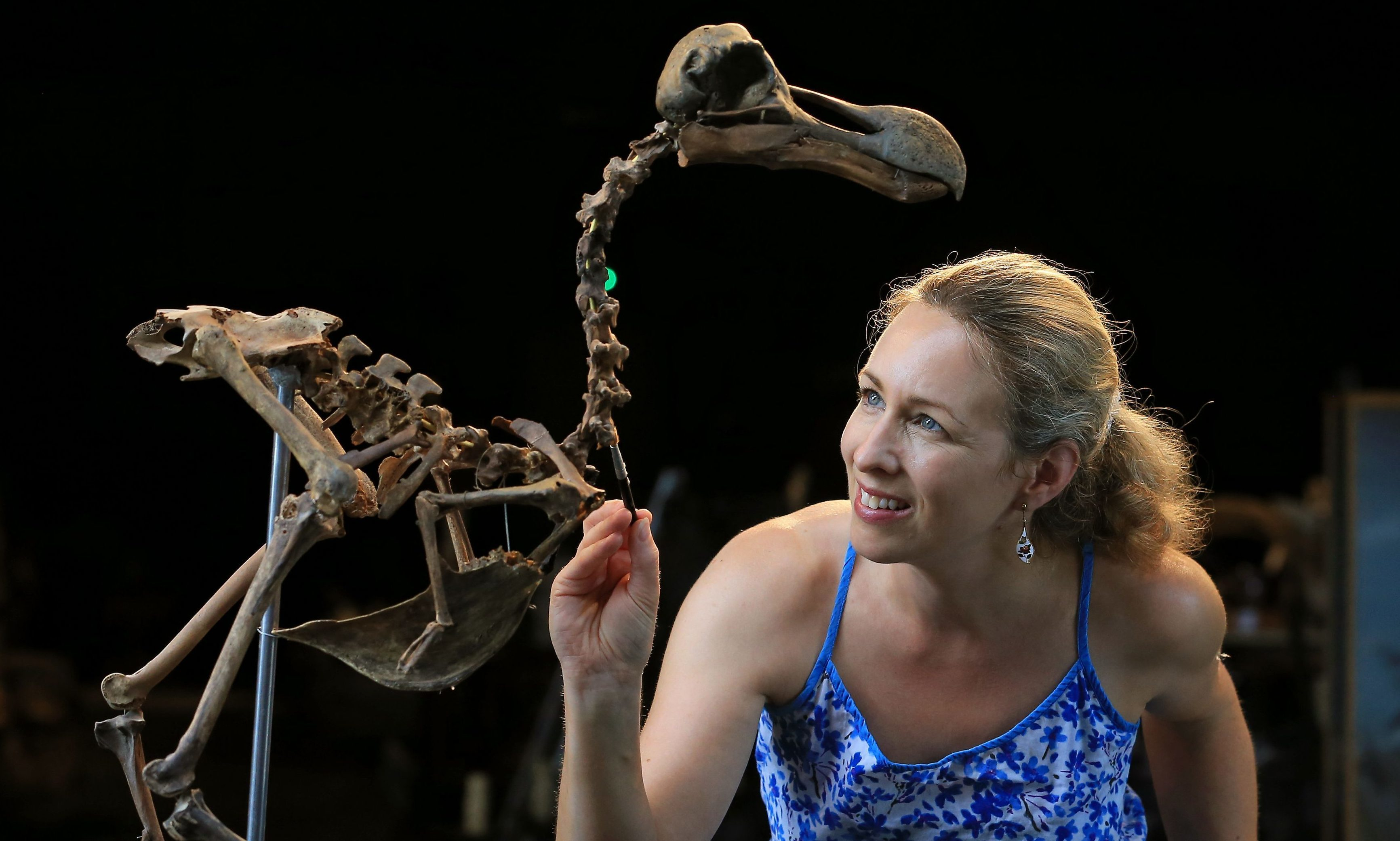 Auction house employee Lindsay Hoadley with the dodo skeleton.