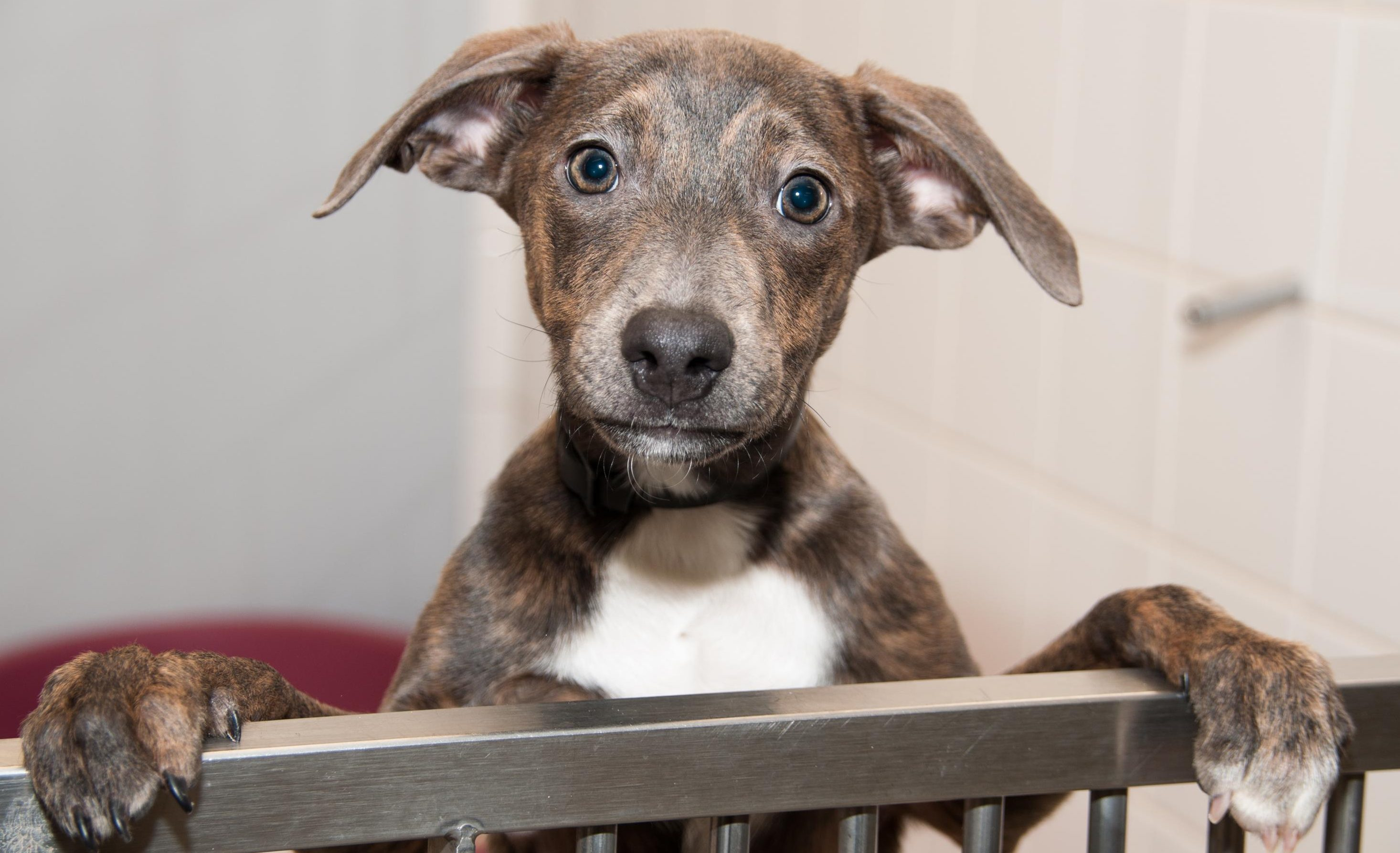 Hundreds of unclaimed dogs may have to be destroyed