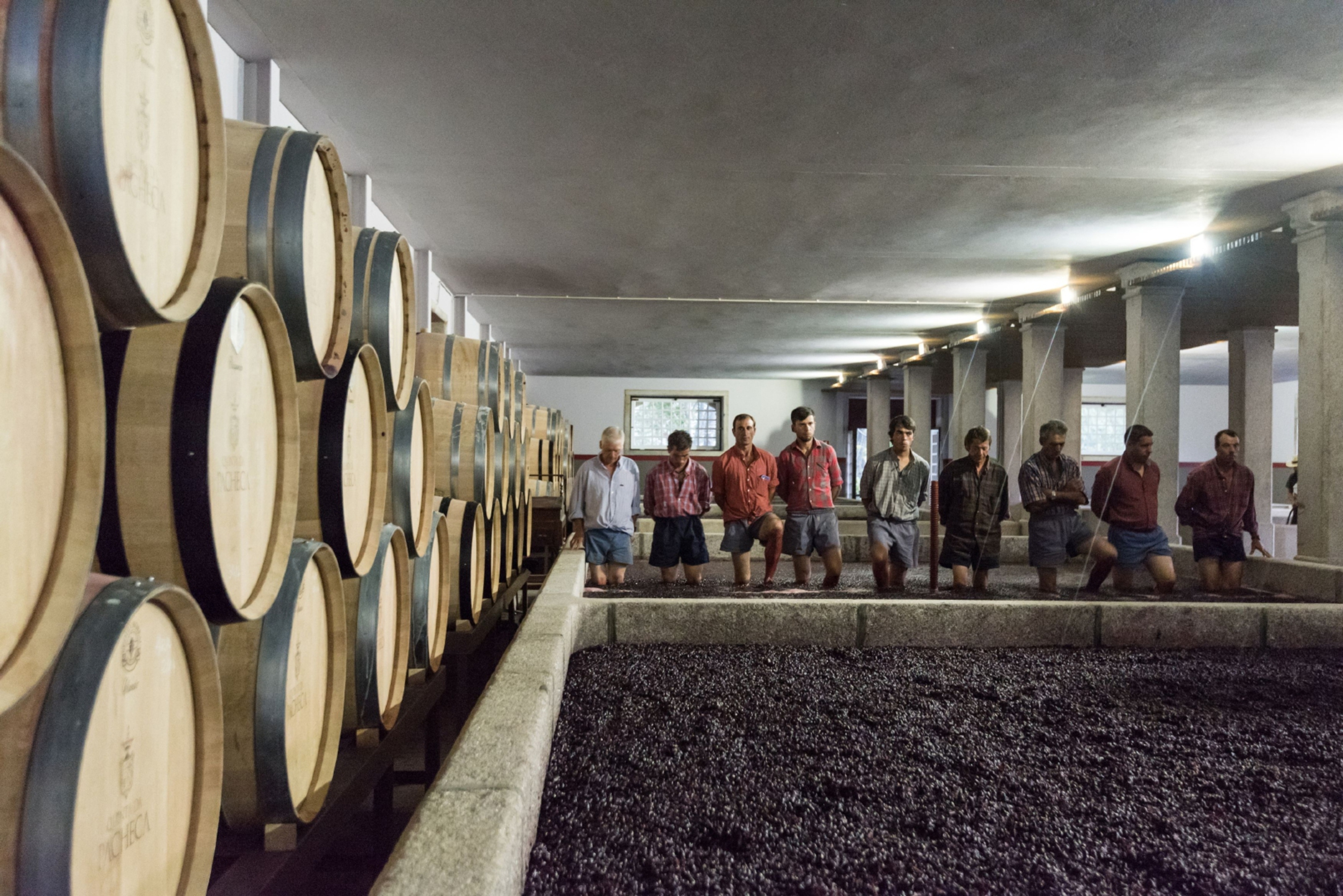 Stomping grapes in the Douro Valley, Portugal.