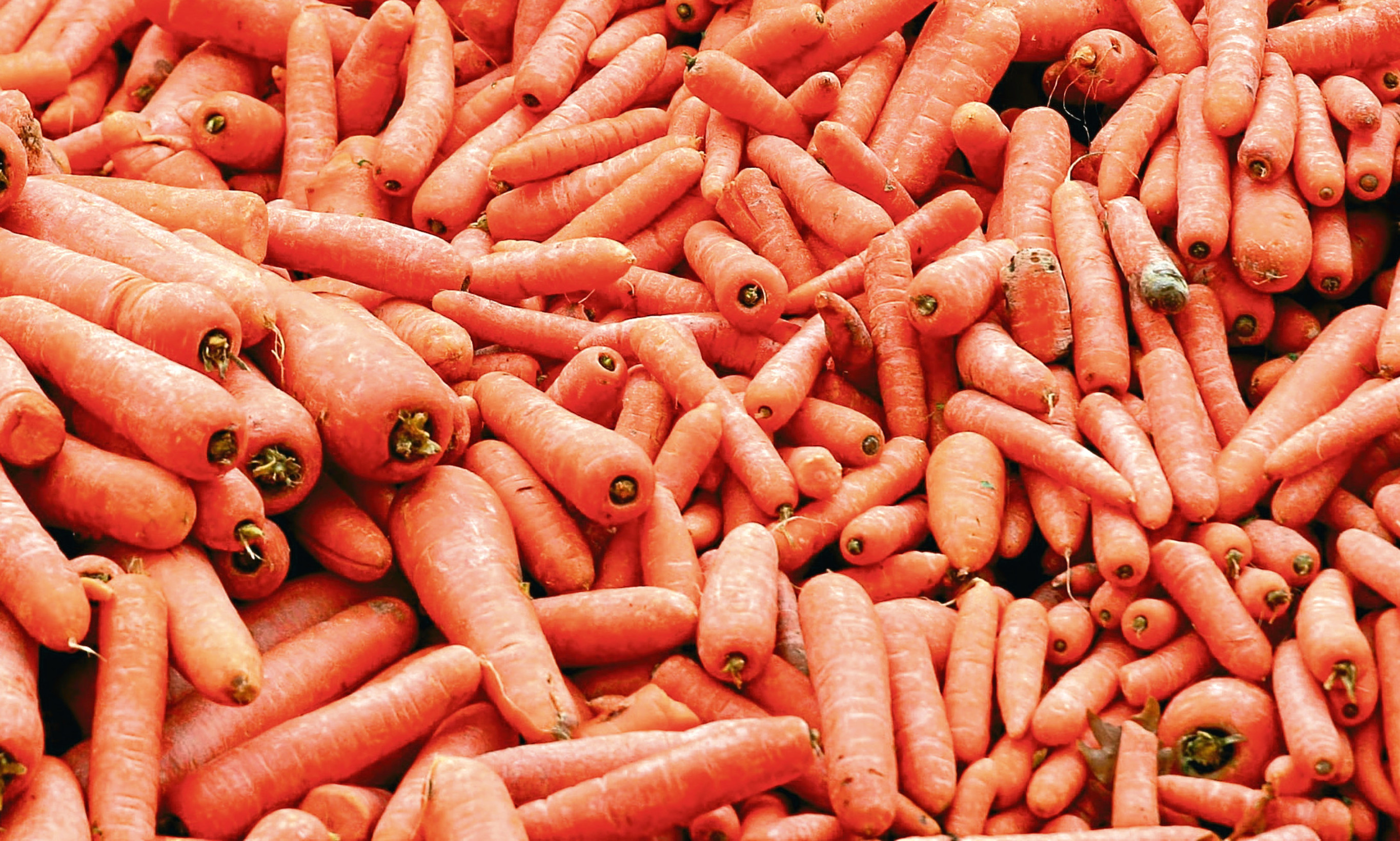 Carrots are being hidden in Dundee's school dinners. A good thing, says Mike.