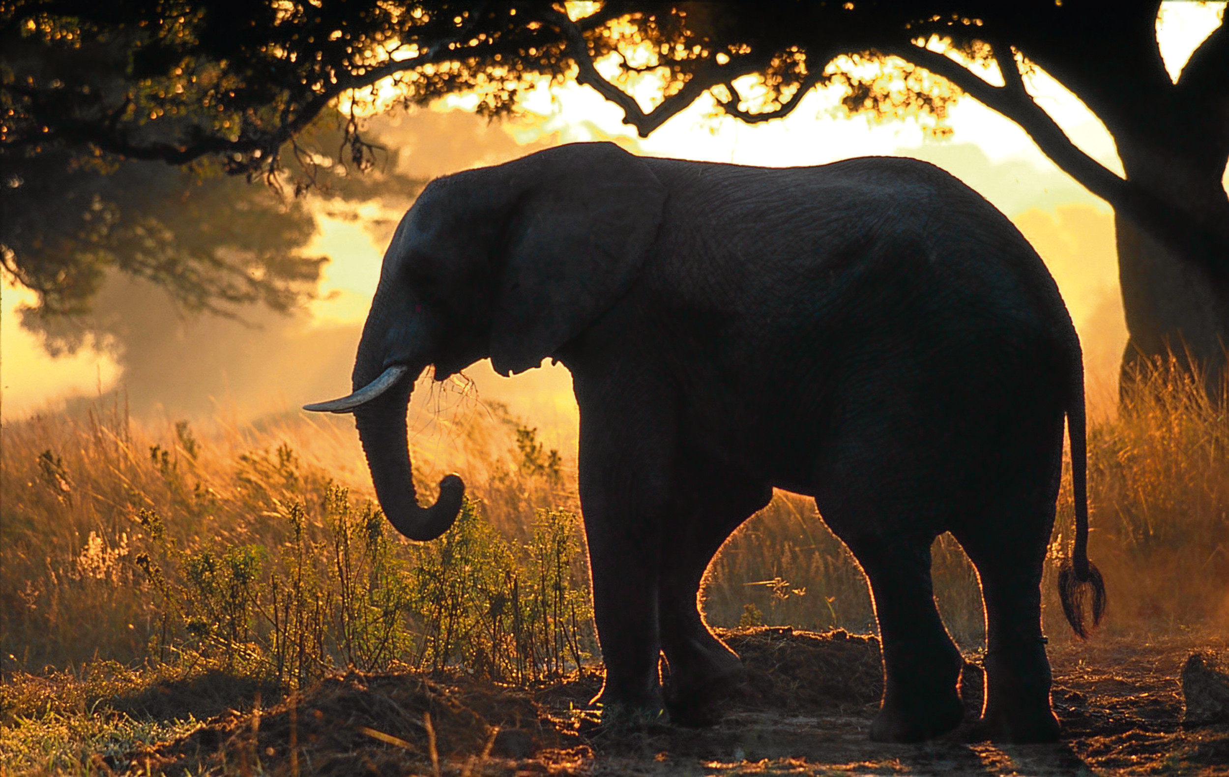 Wildlife woes: Humanity's the problem, says Jim.