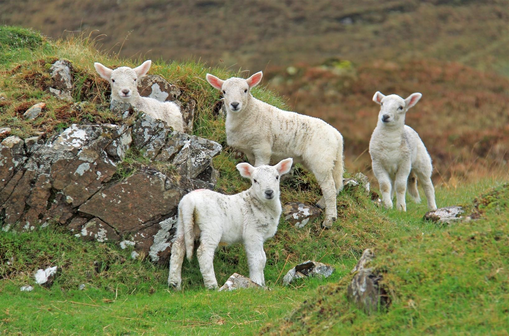 The sheep industry is already suffering from nervous times