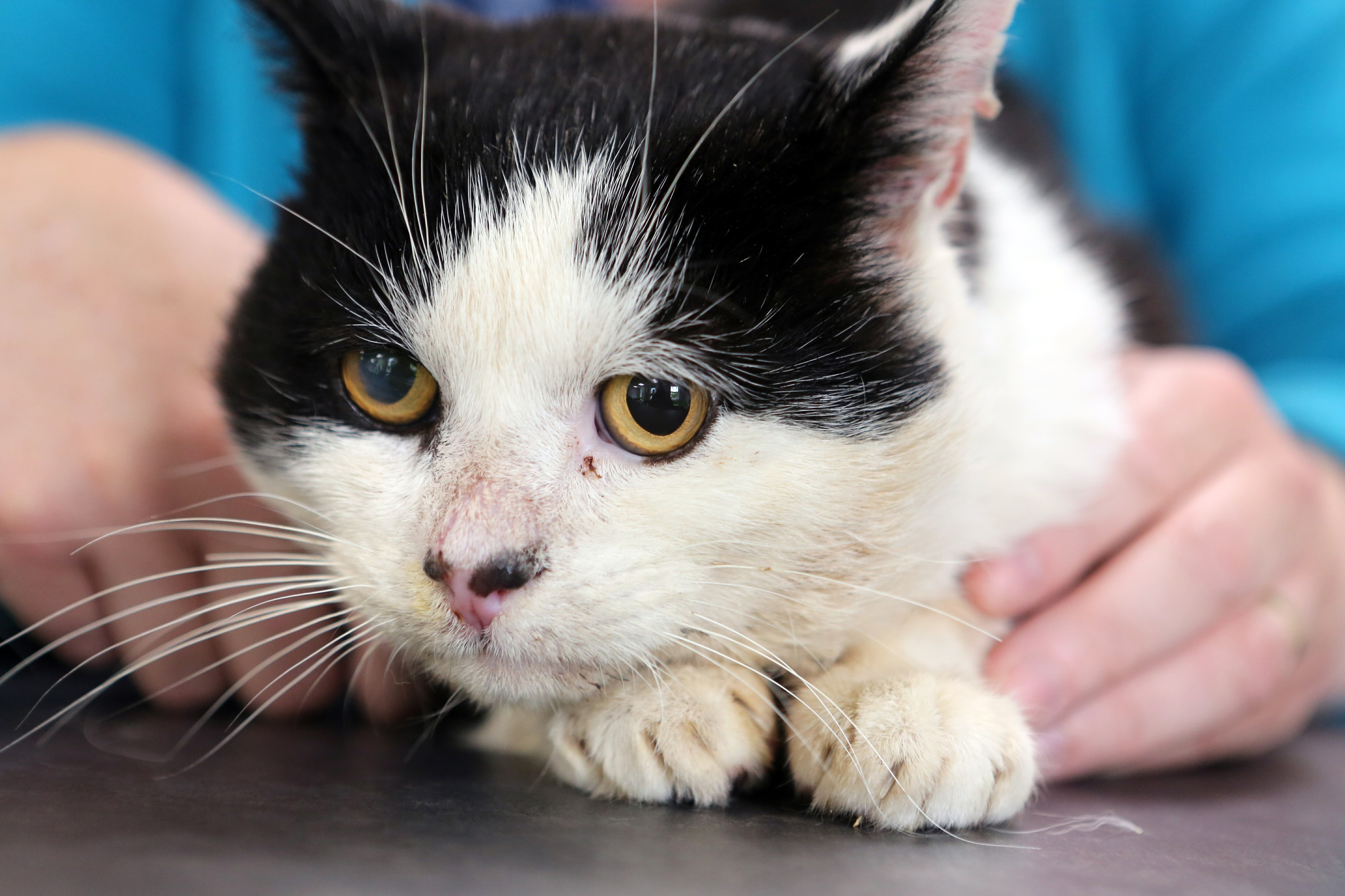 Angus the cat is one of hundreds that the charity has helped.