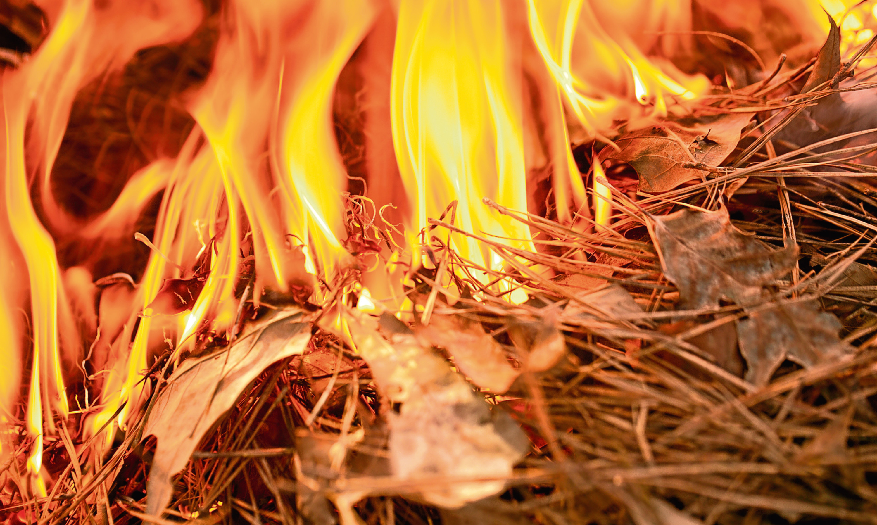 Leaves burning sparked a whole series of nostalgic thoughts for Lucy Penman. Fire Burning through Forest Floor