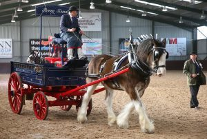 Heavy horse turnout classes were added for the centenary show year. Pictured here is Balmalcolm's Benny Duncan with Davie