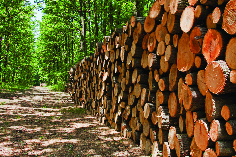 Rural support policies keep forestry and farming industries apart rather than integrated