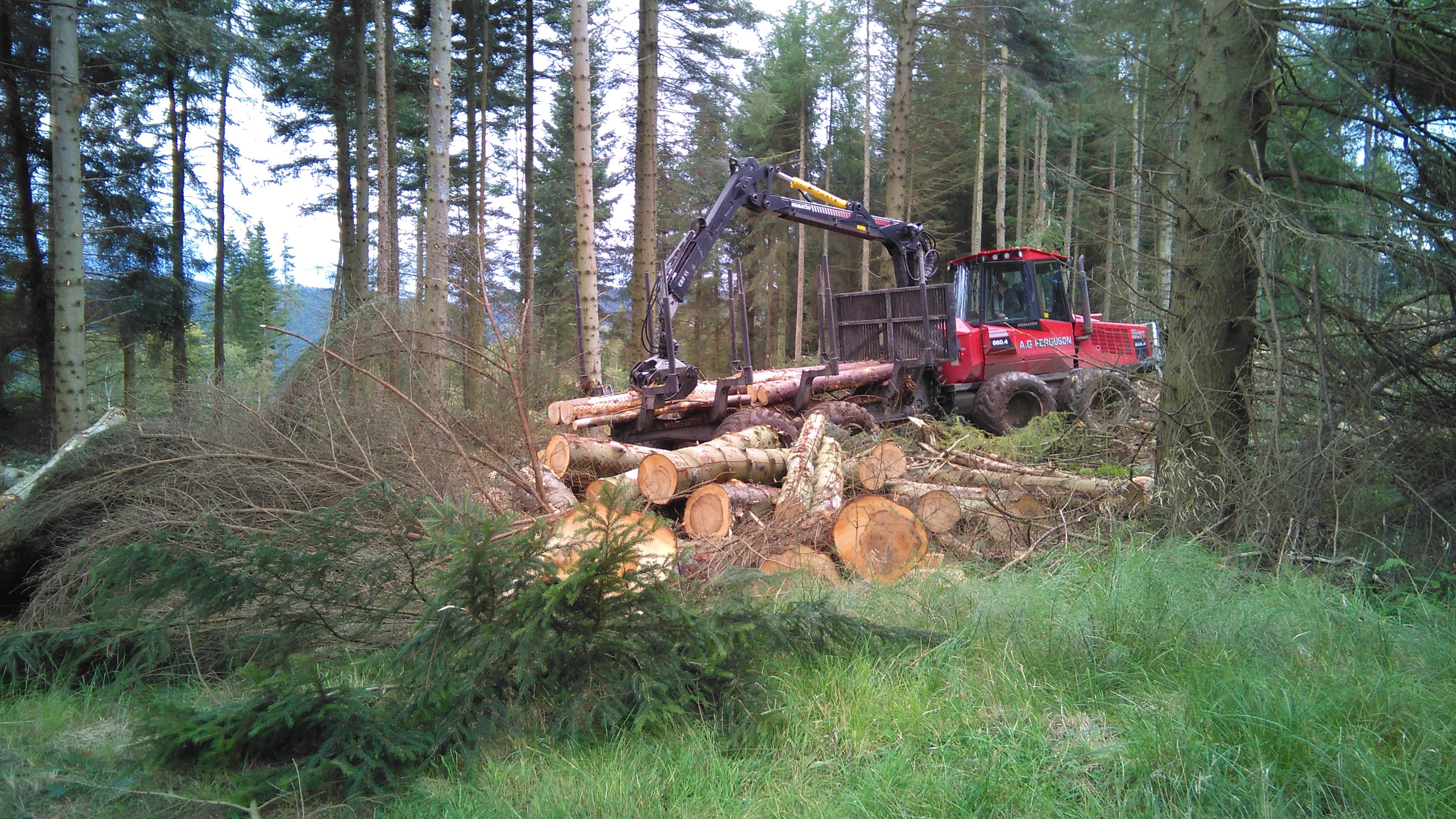 Tree felling at Moncrieffe Hill