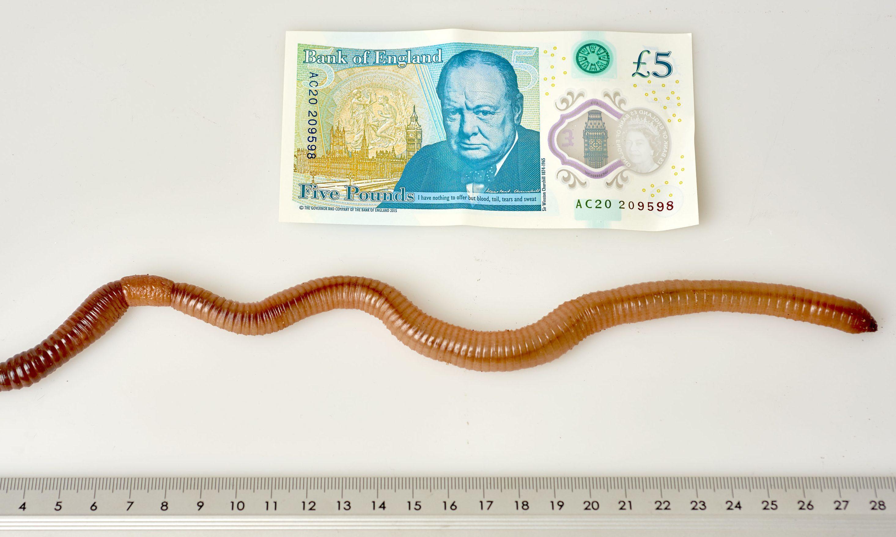 Earthworm Dave.