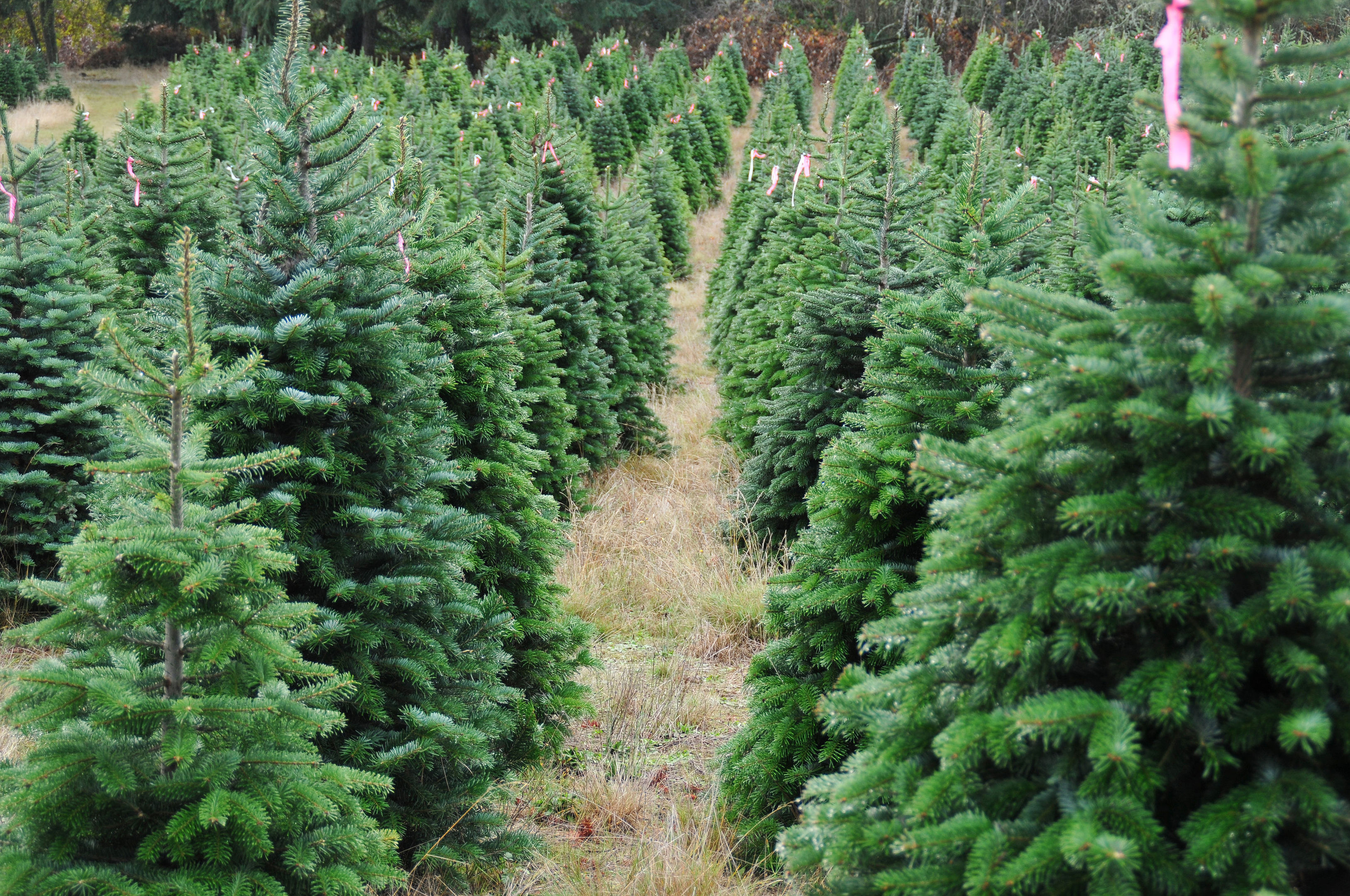 Nicola Sturgeon believes the forestry industry needs the public's support at this time of year