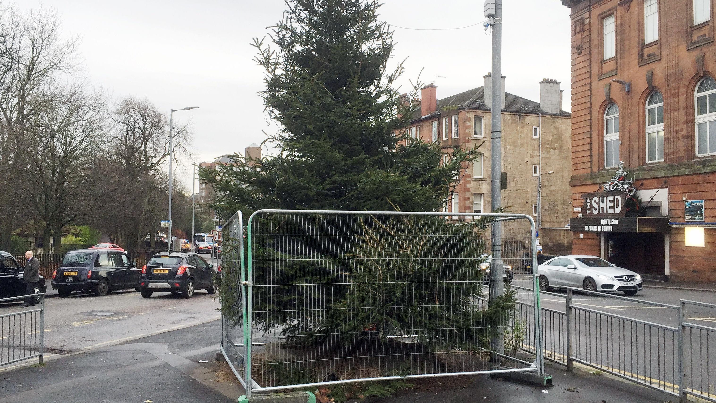 """A """"Free the tree"""" campaign is underway"""