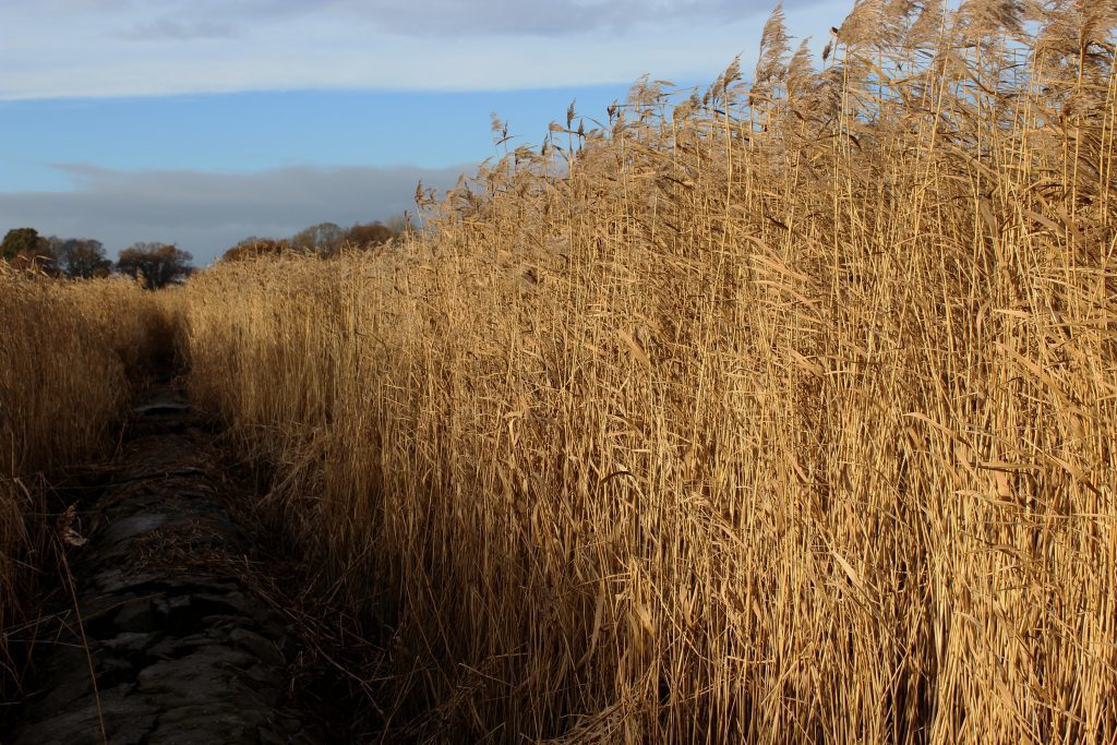 4-exploring-the-reed-beds-james-carron-take-a-hike
