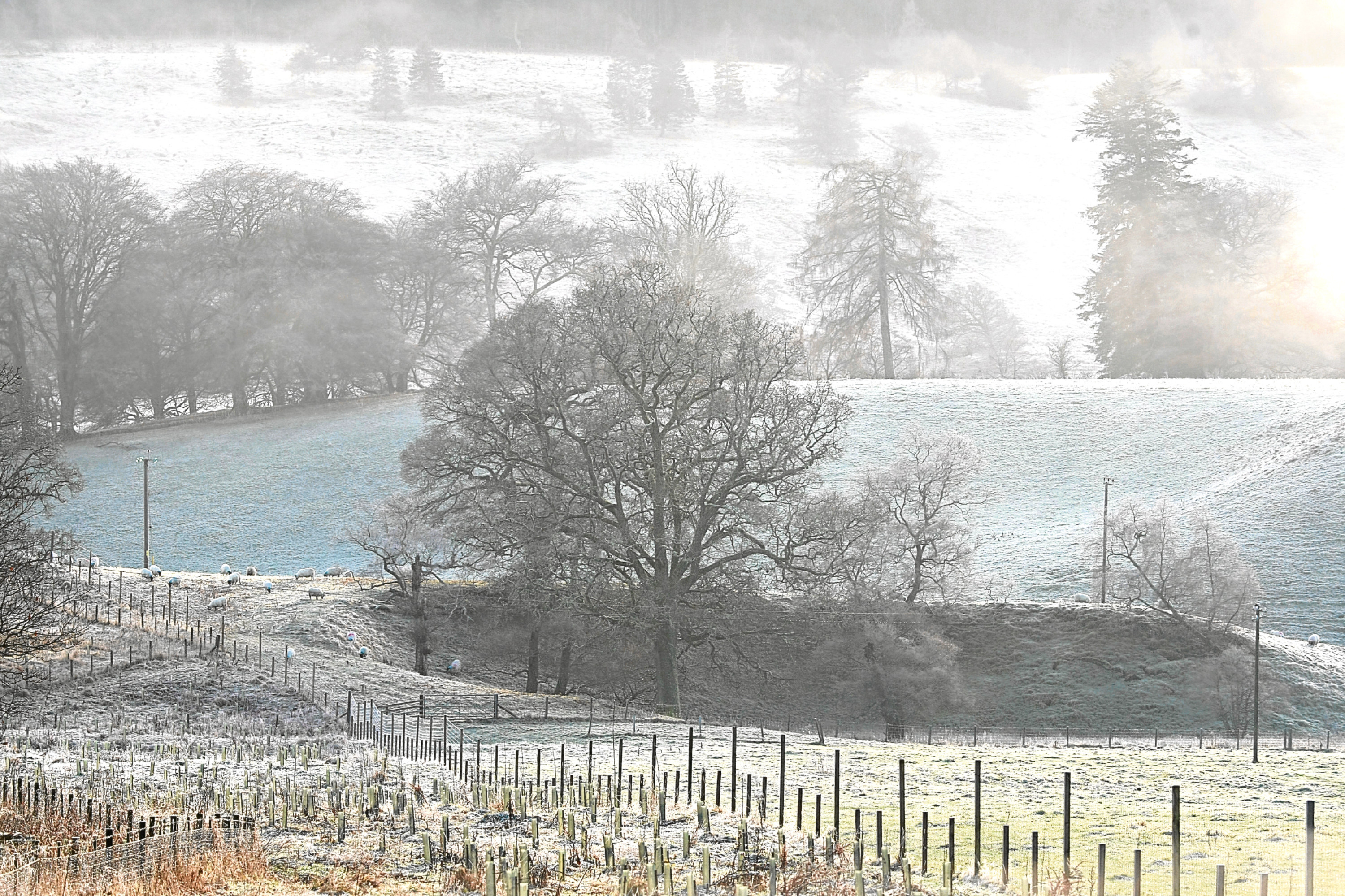 A hard ground frost and winter mist in the Perthshire countryside.