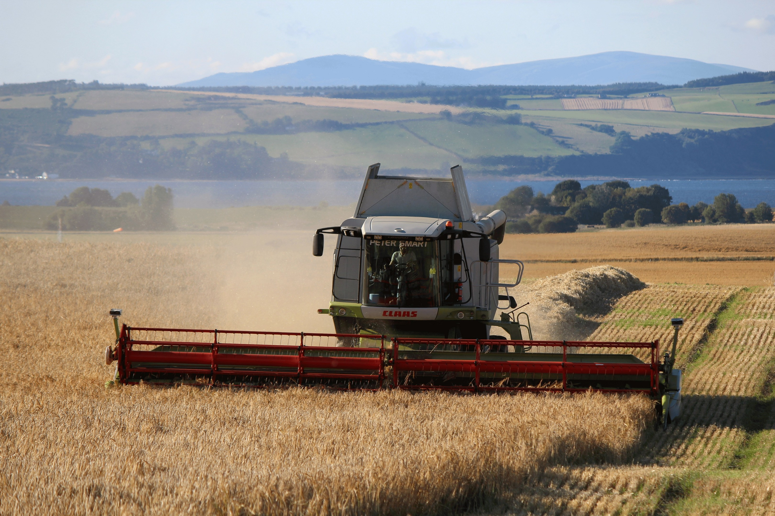 Barley is the second most important crop in UK agriculture