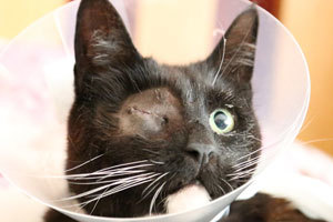 A cat which had its eye removed after being used as target practice by an air weapon owner