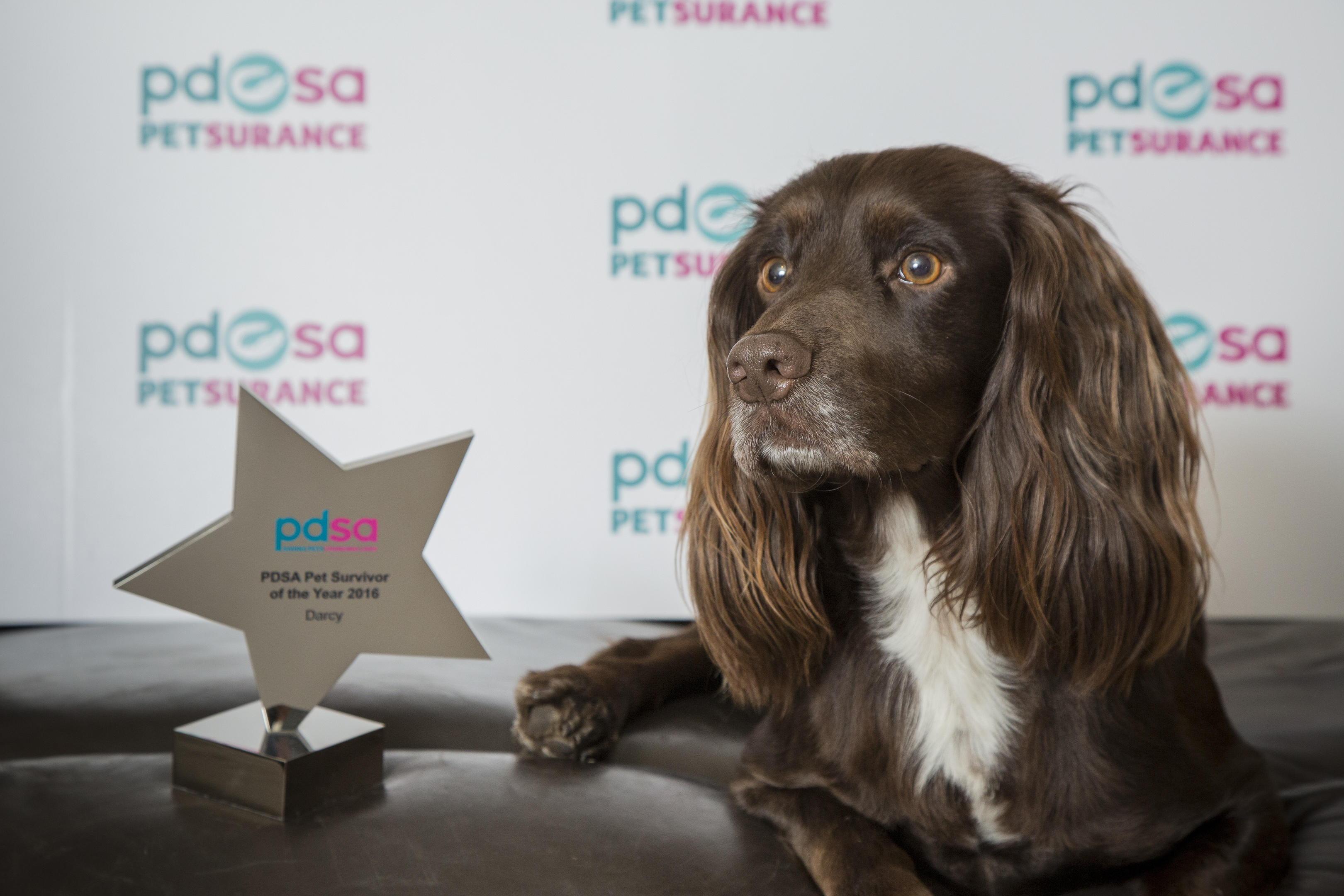 Darcy, with her PDSA award.