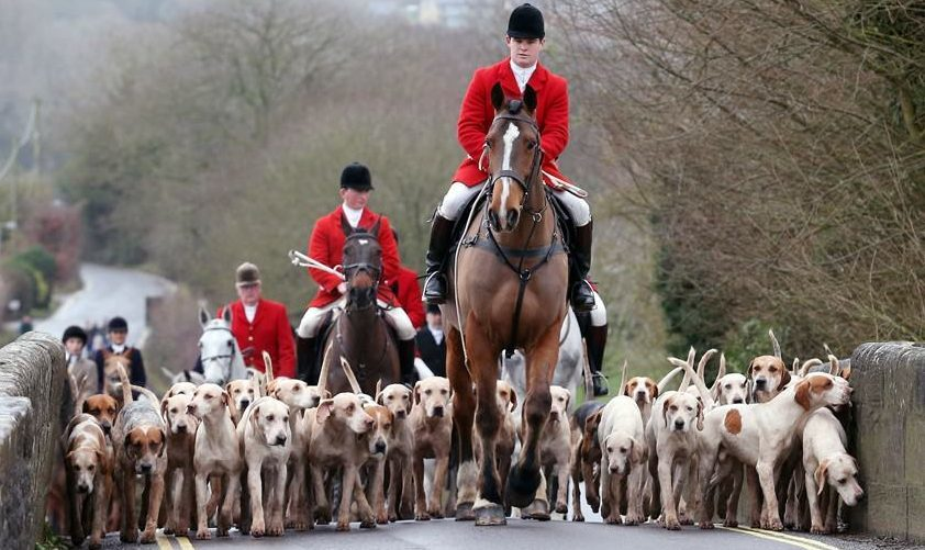 The Scottish Government plans to put forward a new bill on fox hunting.