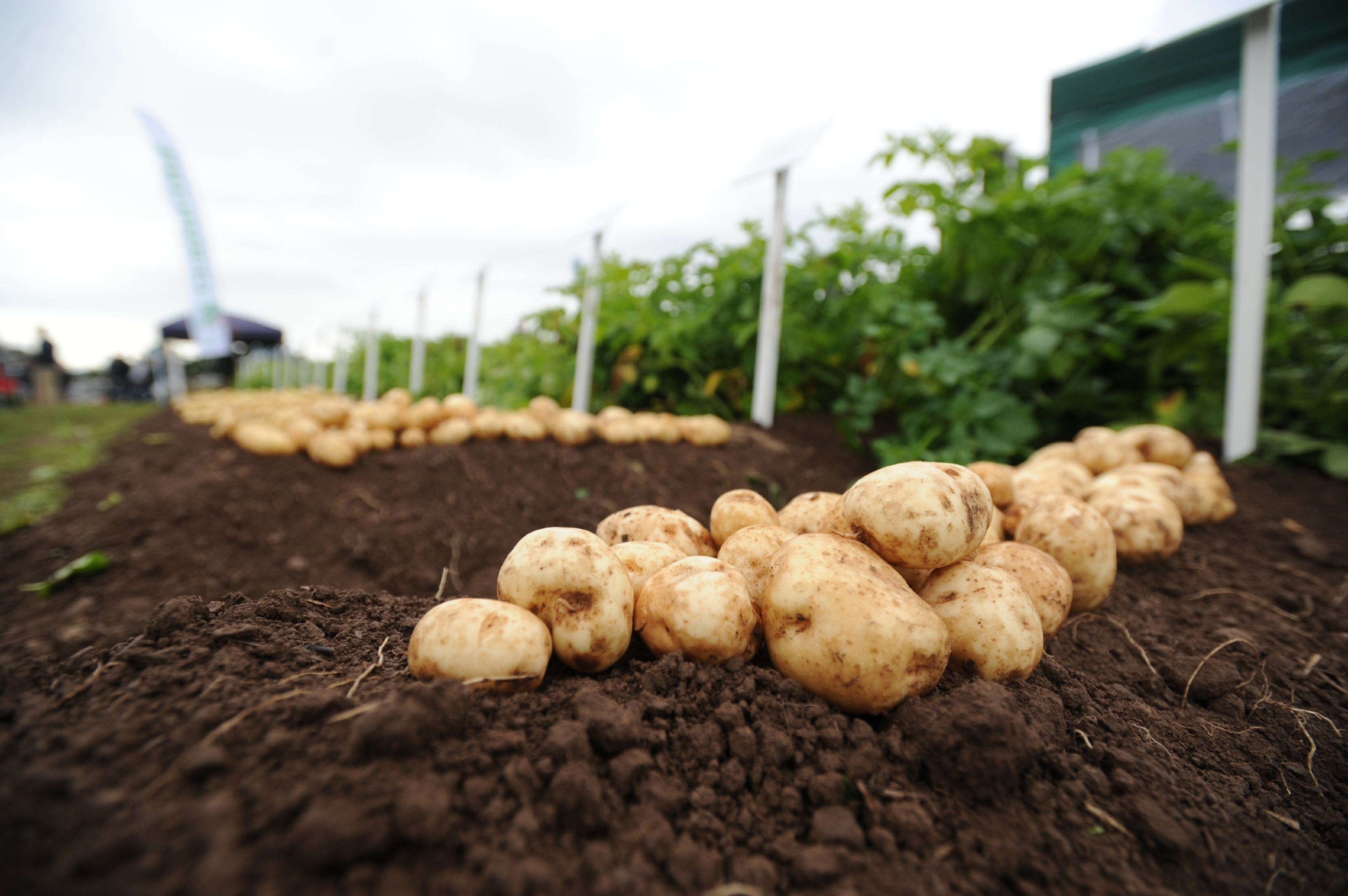 Brexit uncertainty has created a rapidly changing marketplace for potatoes