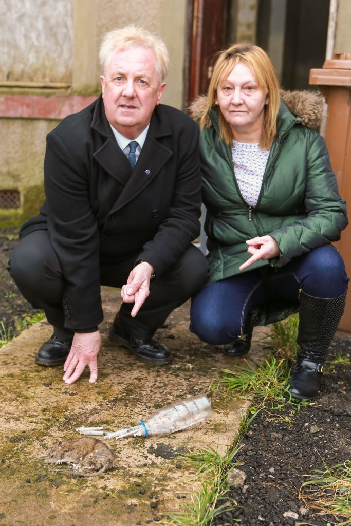 Councillor O'Brien and local resident Phamie Campbell with the body of a dead rat and needles left behind by drug users.