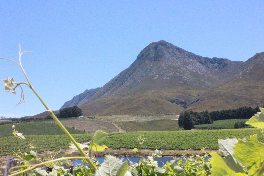 Hermanus, South Africa's most famous wine producing region.