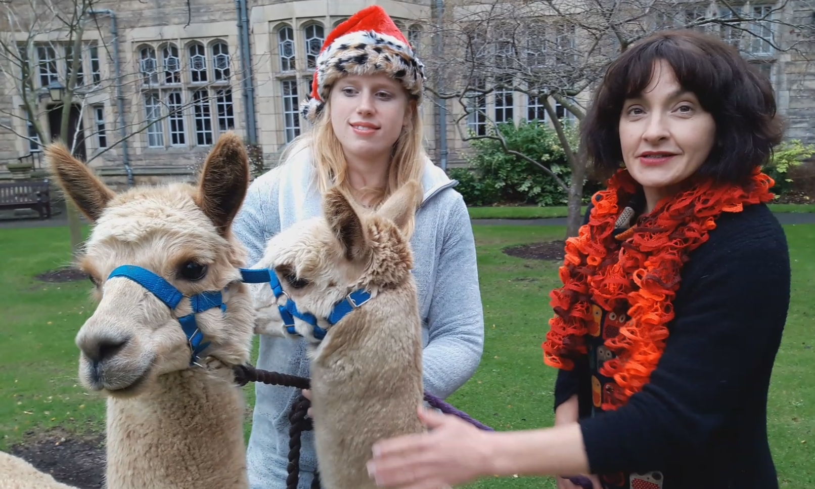 Courier features editor Morag Lindsay (right) with Sarah Johnson of Bowbridge Alpacas.