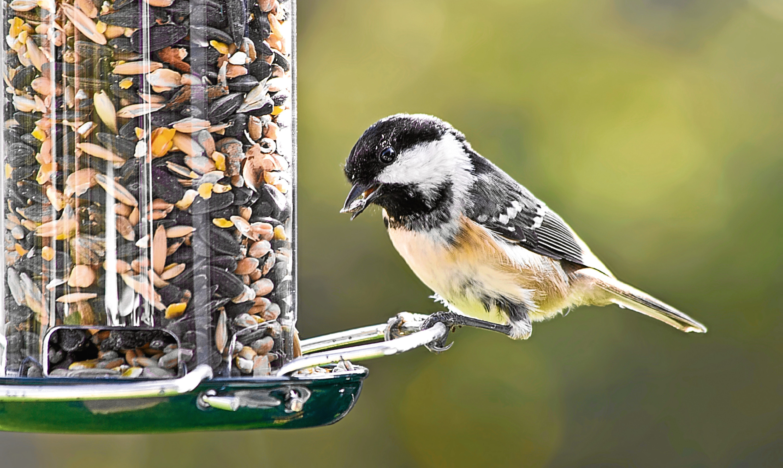 Watching the birds feed in his garden is one of Rabs true pleasures in life.