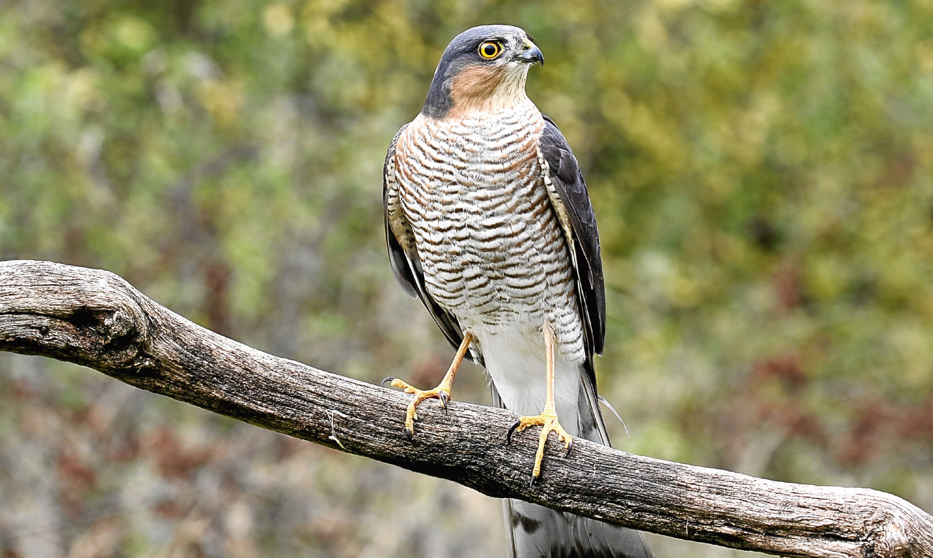 Jim's idea of a special relationship is the way birds like sparrowhawks let their breeding territories overlap with others.