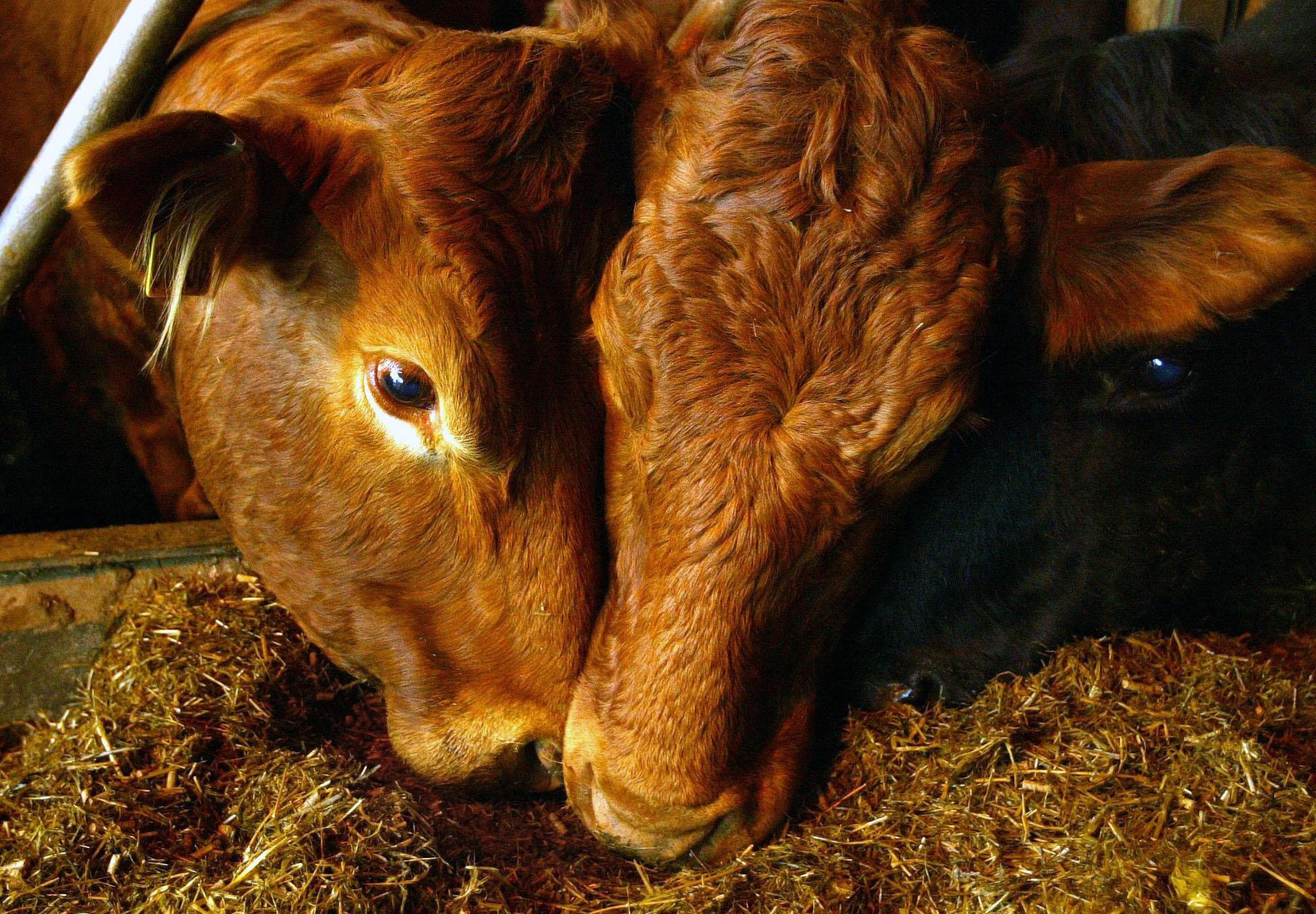 Vets are concerned that Brexit could compromise livestock disease surveillance