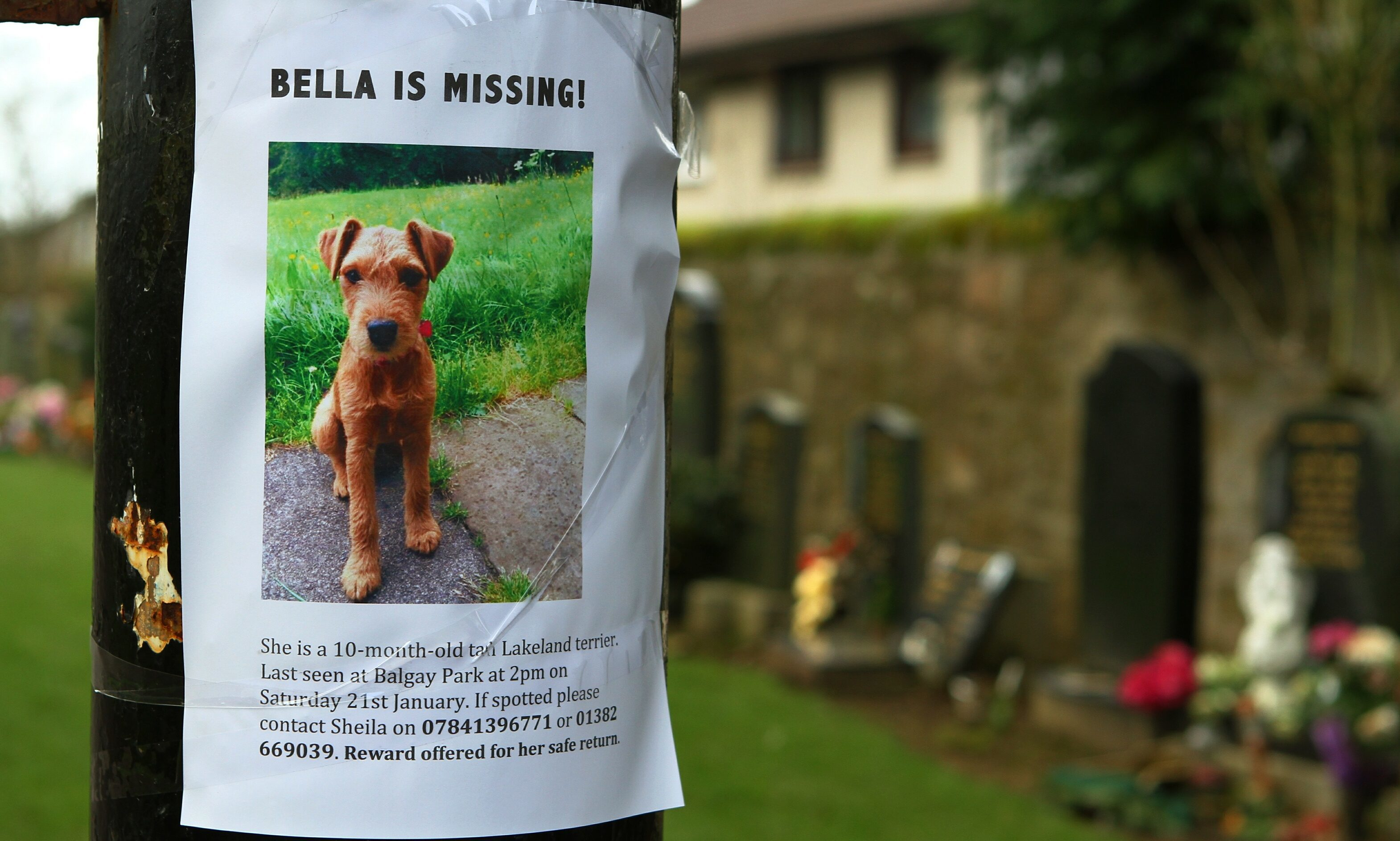 One of the flyers for missing dog Bella on a post at Balgay Cemetery.