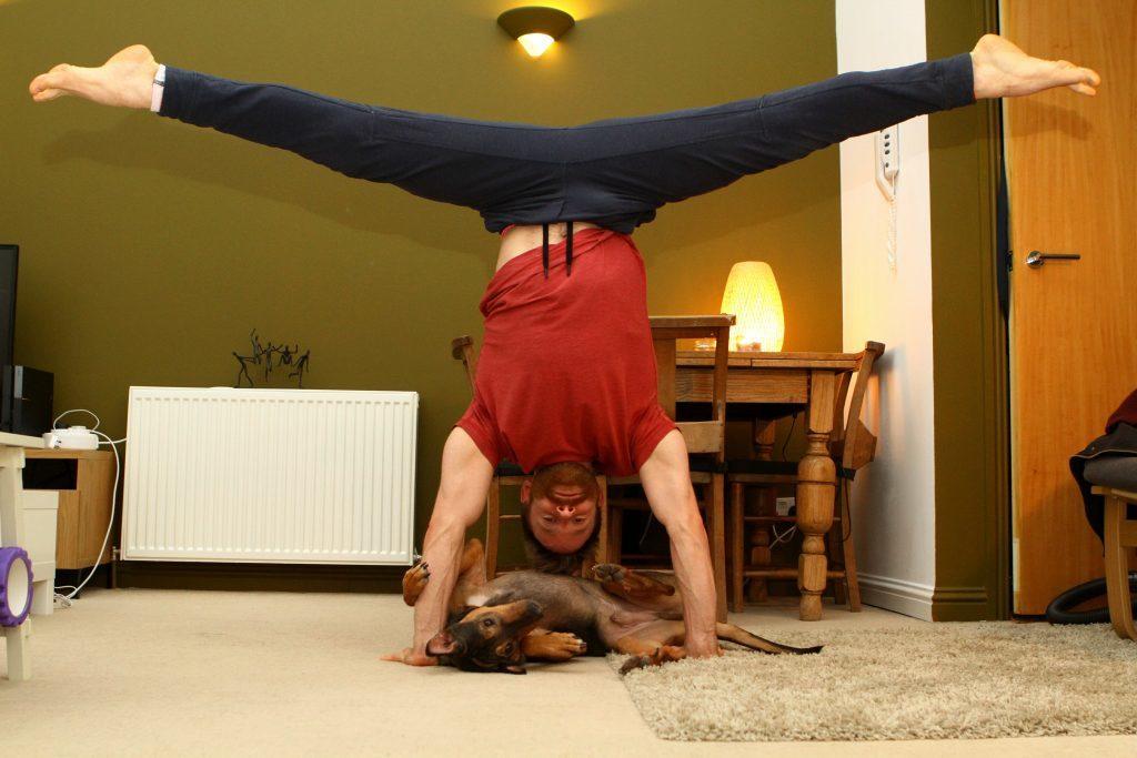 DNic_Yoga_Dog