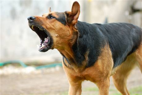Noisy pets are driving some residents to despair, with barking dogs causing the bulk of complaints.