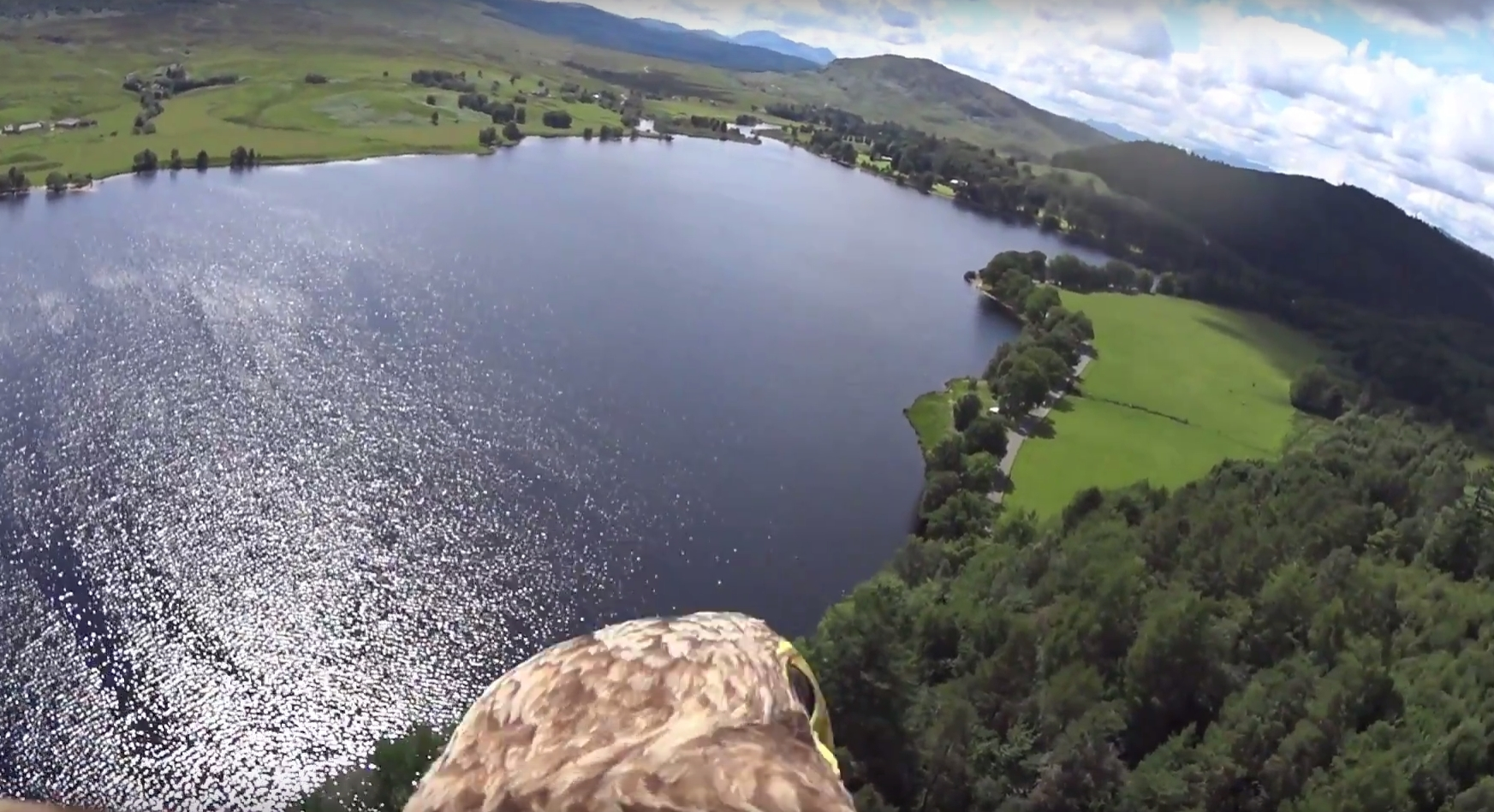A white tailed eagle ventures over Loch Rannoch