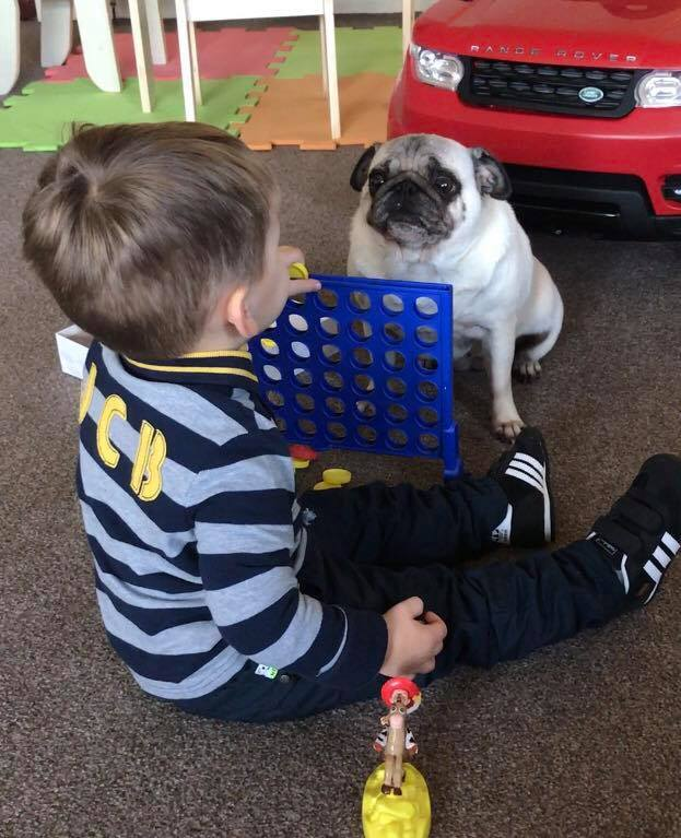pugsnkisses-pugs-and-louise-pics-lynne-flynn-for-www-stars-of-courier-country-mag-lead-1-jpg
