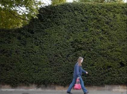 When is a high hedge too high?