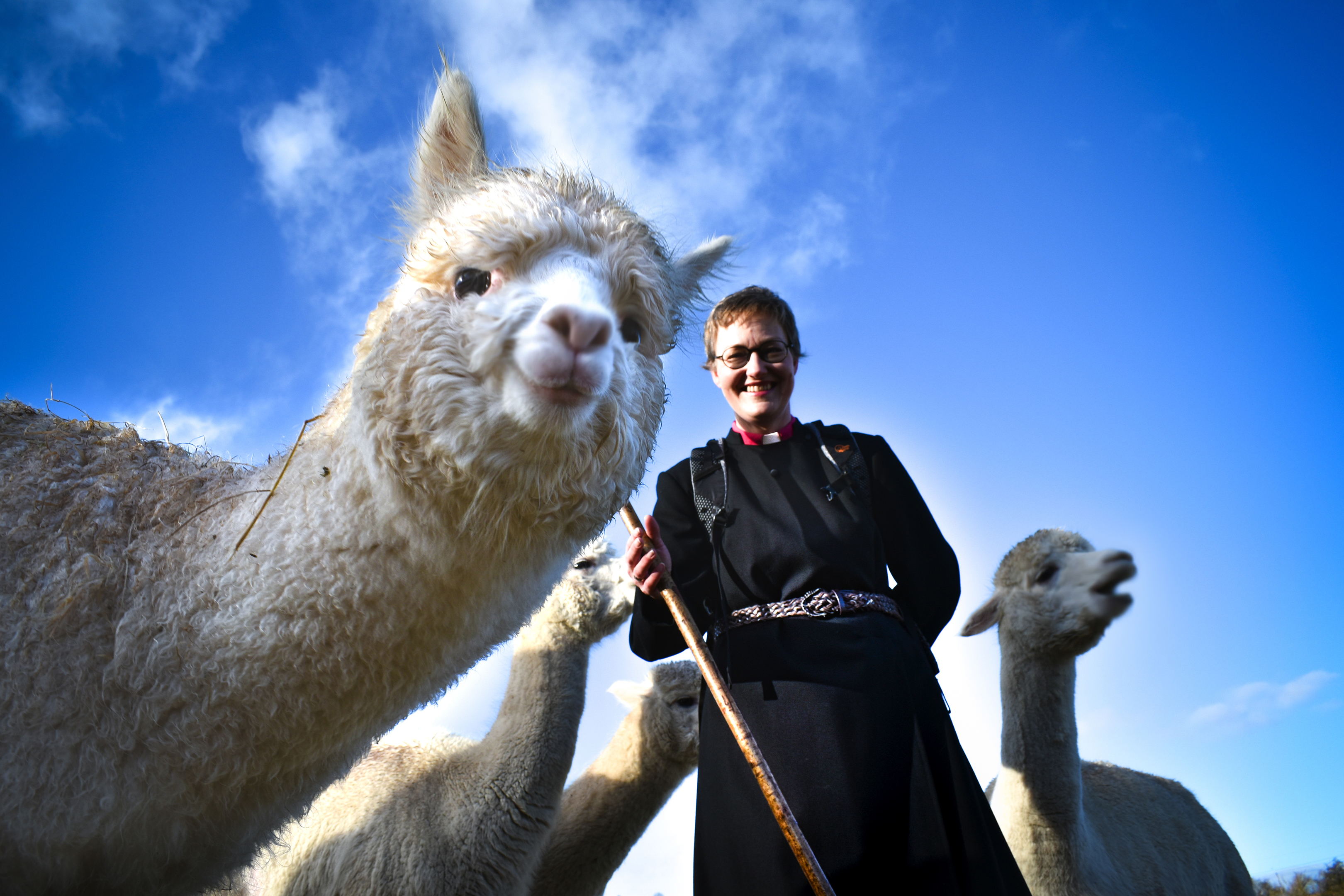 Rev Redman meets Alpacas ahead of her trek in Peru