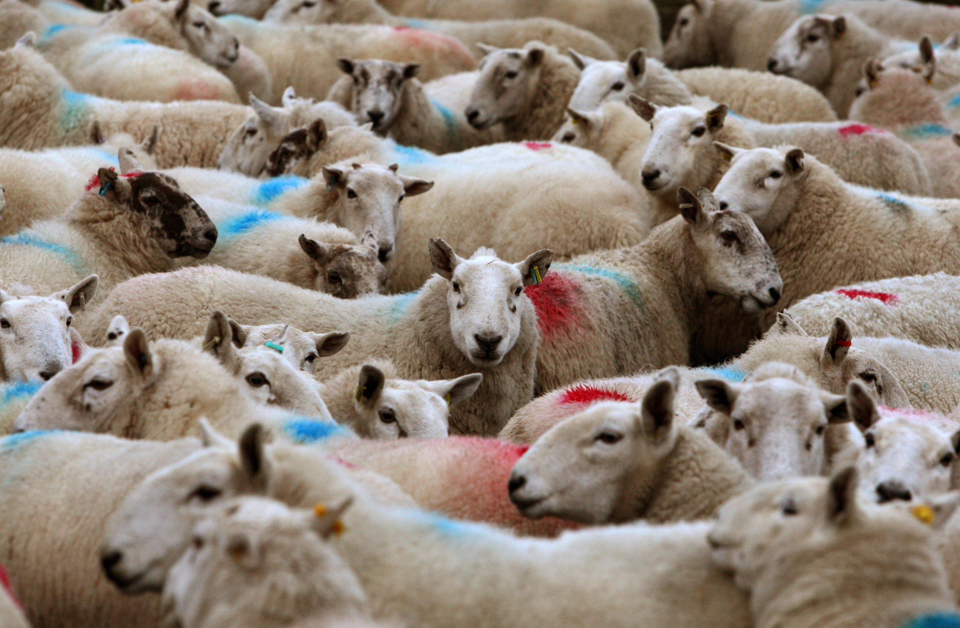Farmers now need to meet the supermarket's specifications