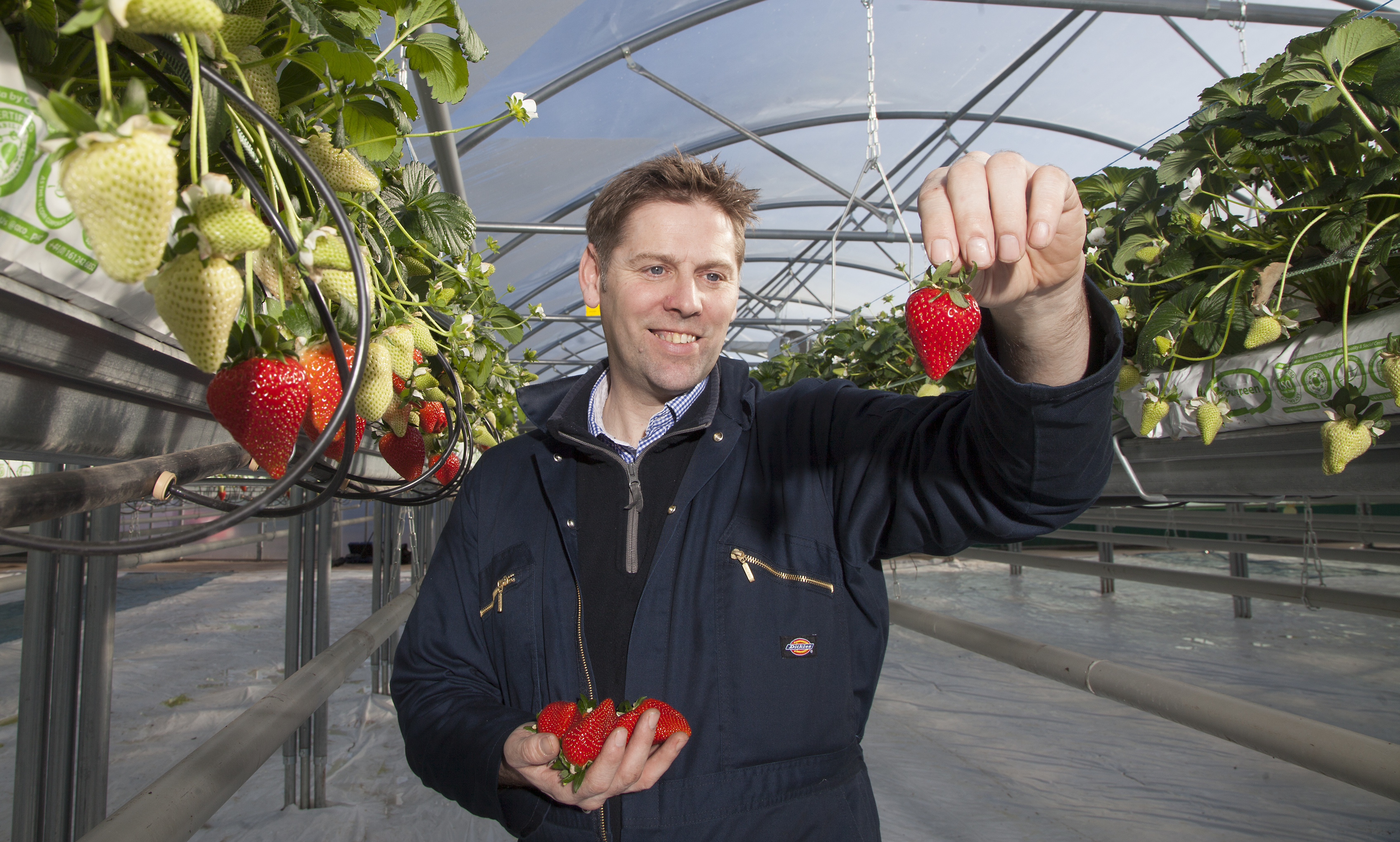 Biomass manager Kenny Shellard hails the early arrival of strawberries in Arbroath.