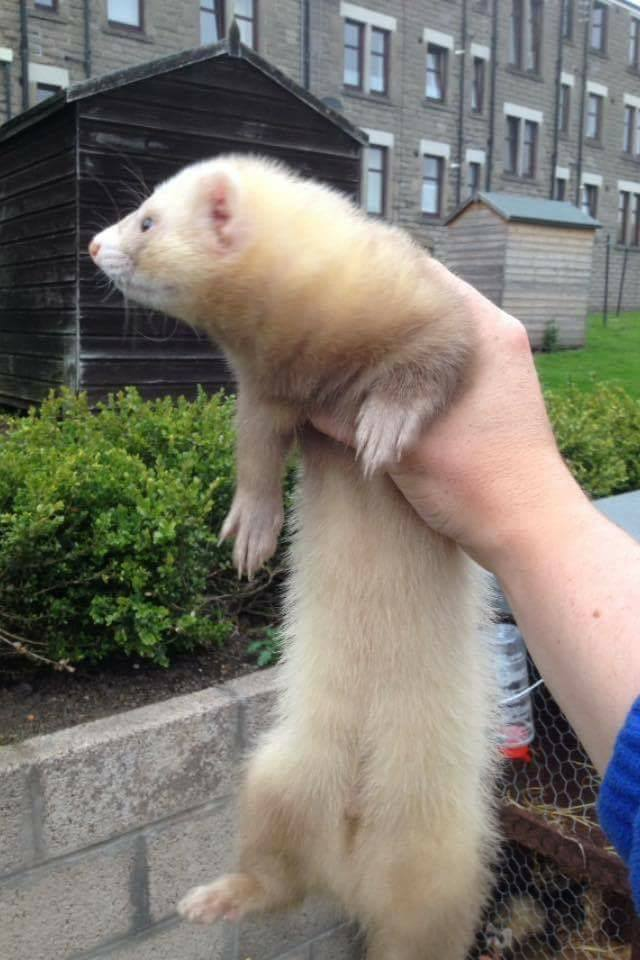 This ferret is still on the loose in the West End.