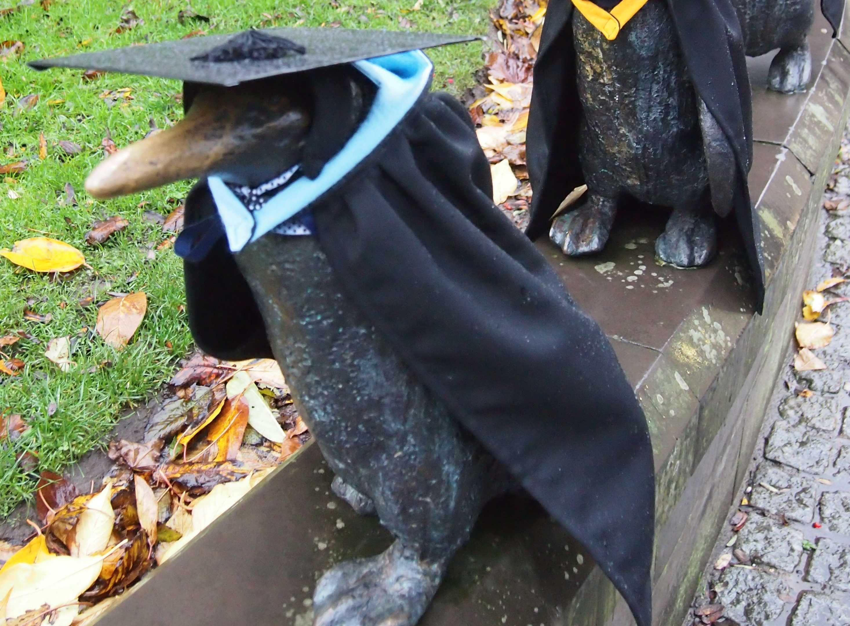Penguins in university robes.