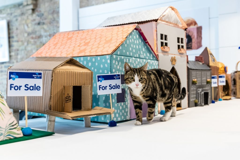 Blue Cross Estate Agent for Cats