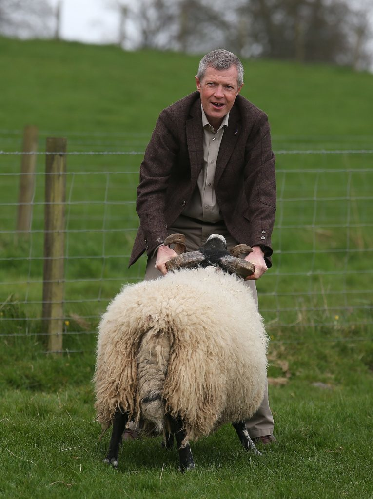 Willie and the sheep discuss the finer points of Lib Dem policy.